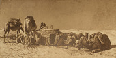 view Camels Feeding, Morocco [photomechanical print] digital asset number 1