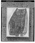 view Owl [graphic arts] / (photographed by Walter Rosenblum) digital asset number 1
