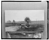 view Goose Herder [art work] / (photographed by Walter Rosenblum) digital asset number 1