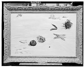 view Starfish and other Objects from the Sea [painting] / (photographed by Walter Rosenblum) digital asset number 1