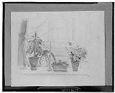 view No Title Given: Still Life with Two Plants, a Bowl of Fruit and a Candle [art work] / (photographed by Walter Rosenblum) digital asset number 1