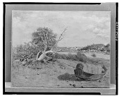 view Coastal Scene with Driftwood and Rowboat [art work] / (photographed by Walter Rosenblum) digital asset number 1