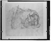 view Sleeping Bull [drawing] / (photographed by Walter Rosenblum) digital asset number 1