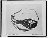 view Squash (drawing) [photograph] / (photographed by Walter Rosenblum) digital asset number 1