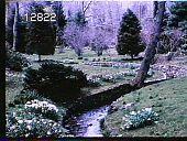view Chanticleer digital asset: Chanticleer: 1976
