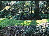 view Chanticleer digital asset: Chanticleer: 08/01/1981