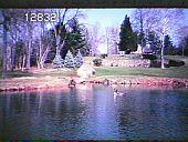 view Chanticleer digital asset: Chanticleer: 04/01/1983