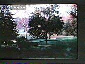 view Chanticleer digital asset: Chanticleer: 07/01/1966