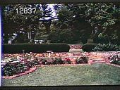 view Chanticleer digital asset: Chanticleer: 06/01/1971