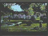 view [Finch Garden] digital asset: [Finch Garden]: 1939.