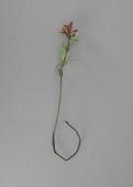 view <I>Metal sculpture, Wyoming state flower - Indian Paintbrush</I> digital asset number 1