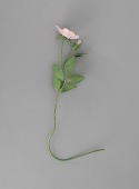 view <I>Metal sculpture, Iowa and North Dakota state flower - Wild Rose</I> digital asset number 1