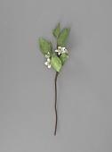 view <I>Metal sculpture, Florida state flower - Orange Blossom</I> digital asset number 1