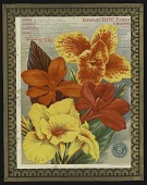 """view <I>Seed catalog page, Vaughan's """"ELITE"""" Canna Collection</I> digital asset number 1"""