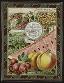 view <I>Seed catalog page, Salzer's Early Bird Novelties</I> digital asset number 1