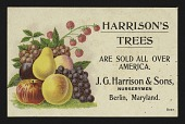 view <I>Trade card, Harrison's Trees</I> digital asset number 1