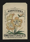 view <I>Seed packet, Comstock, Ferre, & Co., agrostemma flower</I> digital asset number 1