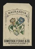 view <I>Seed packet, Comstock, Ferre, & Co., maurandya</I> digital asset number 1