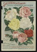 view <I>Nursery catalog page, Dingee & Conrad Co. Success with Flowers</I> digital asset number 1