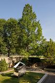 view Metasequoia glyptostroboides digital asset: Photographed by: Hannele Lahti