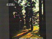 view Welwyn digital asset: Welwyn: 1930