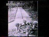 view Young Garden digital asset: Young Garden: 1930