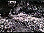 view [Henry Francis du Pont Winterthur Museum Gardens]: view of iris looking south. digital asset: [Henry Francis du Pont Winterthur Museum Gardens]: view of iris looking south.: 1929.