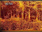 view [Baymeath]: perennial bed at wood's edge. digital asset: [Baymeath]: perennial bed at wood's edge.: [1920?]