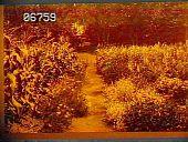 view [Baymeath]: walkway through flower-lined vegetable garden with corn. digital asset: [Baymeath]: walkway through flower-lined vegetable garden with corn.: [1920?]