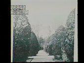 view [Naumkeag]: the 1890 Arborvitae Walk and Evergreen Garden. digital asset: [Naumkeag]: the 1890 Arborvitae Walk and Evergreen Garden.: [1928?]