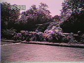 view [The Chimneys]: angled view of walkway leading up to stairs surrounded by shrubs, flowers, and trees. digital asset: [The Chimneys]: angled view of walkway leading up to stairs surrounded by shrubs, flowers, and trees.: [1930?]
