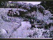 view Unidentified Garden in Grosse Pointe, Michigan digital asset: Unidentified Garden in Grosse Pointe, Michigan: 1930