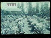 view [Welbourne]: a view of the gardens. digital asset: [Welbourne]: a view of the gardens.: 1984 Feb.