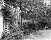 view [Balch Garden]: garden border and trellis. digital asset: [Balch Garden] [safety film negative]: garden border and trellis.