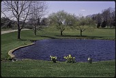 view [Bloomsbury Garden]: pond and driveway. digital asset: [Bloomsbury Garden] [slide (photograph)]: pond and driveway.