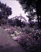 view [Cowan Garden]: garden border, with house in background. digital asset: [Cowan Garden] [film transparency]: garden border, with house in background.