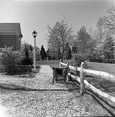 view [Elliot Garden]: view along front of house, with dog. digital asset: [Elliot Garden] [safety film negative]: view along front of house, with dog.