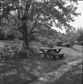 view [MacFadden Garden]: picnic table under apple tree. digital asset: [MacFadden Garden] [safety film negative]: picnic table under apple tree.
