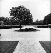 view [Converse Garden]: looking from front entrance of house to circular driveway. digital asset: [Converse Garden] [contact print]: looking from front entrance of house to circular driveway.