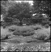 view [Unidentified Garden in Unknown Location]: garden, sundial, lawn, and pergola. digital asset: [Unidentified Garden in Unknown Location] [safety film negative]: garden, sundial, lawn, and pergola.