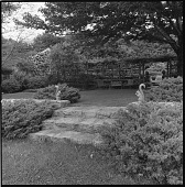 view [Unidentified Garden in Unknown Location]: stone stairs and a seating area on a lawn adjacent to the pergola, with squirrel sculptures as decorative elements. digital asset: [Unidentified Garden in Unknown Location] [safety film negative]: stone stairs and a seating area on a lawn adjacent to the pergola, with squirrel sculptures as decorative elements.