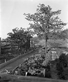 view [Unidentified Garden in Unknown Location]: raised beds of herbs and edibles, with rhubarb in foreground and orchard in background; note plant labels. digital asset: [Unidentified Garden in Unknown Location]: raised beds of herbs and edibles, with rhubarb in foreground and orchard in background; note plant labels.: [between 1960 and 1994]
