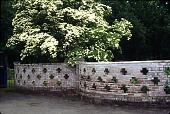 view [Unidentified Garden in Unknown Location]: Kousa dogwood beyond decoratively pierced brick wall. digital asset: [Unidentified Garden in Unknown Location]: Kousa dogwood beyond decoratively pierced brick wall.: 1998 Jun.