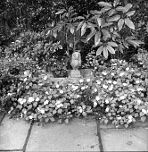 view [Unidentified Garden in Unknown Location]: detail of planting at edge of patio. digital asset: [Unidentified Garden in Unknown Location] [contact print]: detail of planting at edge of patio.