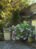 view [Virginia Spencer Garden]: potted hydrangea and female sculpture on stone walkway. digital asset: [Virginia Spencer Garden]: potted hydrangea and female sculpture on stone walkway.: 2005.