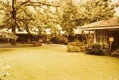 view [Dunklin Garden 1955-1987]: lawn looking toward oak tree and house. digital asset: [Dunklin Garden 1955-1987]: lawn looking toward oak tree and house.: 1987 Oct.
