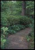 view [Brown Garden]: A mortared field stone walkway traverses the woodland garden along one side of the property. digital asset: [Brown Garden]: A mortared field stone walkway traverses the woodland garden along one side of the property.: 2006 May.