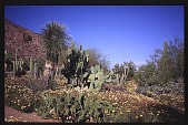 view [El Estribo]: pathways through desert plantings. digital asset: [El Estribo]: pathways through desert plantings.: 1996 Mar.