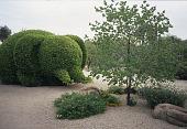 """view [Bentley Garden]: """"Eleanor Elephant"""" topiary of citrus aurantium or bitter orange. digital asset: [Bentley Garden]: """"Eleanor Elephant"""" topiary of citrus aurantium or bitter orange.: 2008"""