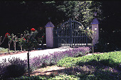view Tobin Garden: western gate and drive with lavender border; gate is new but similar to original except for being higher in center to ward off deer. digital asset: Tobin Garden: western gate and drive with lavender border; gate is new but similar to original except for being higher in center to ward off deer.: 1993 Jun.